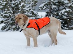 Track Jacket that is light reflective to keep your dog safe even for night walks.