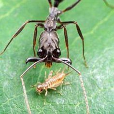 Más consejos para eliminar hormigas