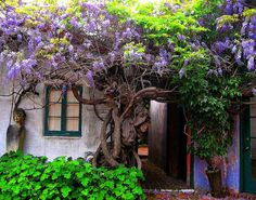 I want to walk through this passage way under the wisteria vine gorgeousness.