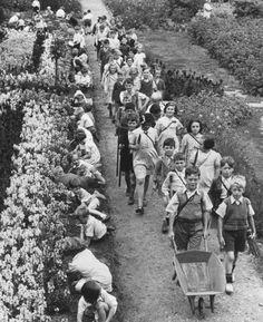 Children gardening during their holidays at a school in Cobham, Surrey, August 1940.