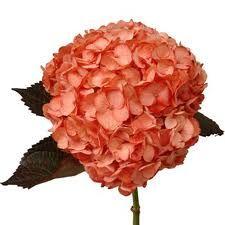red orange coral flower arrangements - Google Search