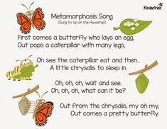"""Metamorphosis should also be called """"The Long Wait."""" Well, we just had our Open House last Thursday evening and our caterpillars finally w. Kindergarten Songs, Preschool Music, Preschool Science, Preschool Lessons, Science Inquiry, Teaching Music, Caterpillar Song, Very Hungry Caterpillar, Butterfly Songs"""