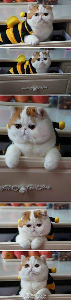 My next cat & Sassys future best friend!!