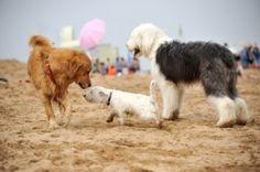 Tackle socialization problems at the dog park with this great article.