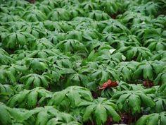 plants in the rain