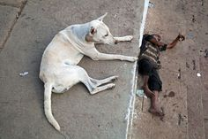 https://flic.kr/p/9byJs3   Dog - Varanasi, India   Varanasi, India.  4 weeks in India with Jason, Oli and Sebastian.  www.maciejdakowicz.com  Add me on  facebook