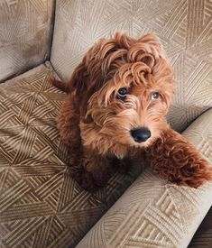Dog Breeds Little .Dog Breeds Little Cute Baby Animals, Animals And Pets, Funny Animals, Cute Dogs And Puppies, I Love Dogs, Doodle Dog, Fauna, Doge, Cockapoo
