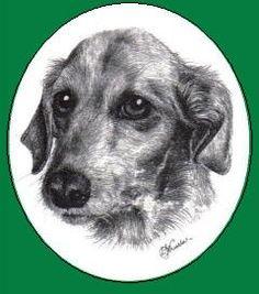 Sussex Pet Rescue