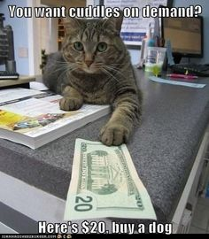 You want cuddles on demand? Here's $20, buy a dog. #funny #cats