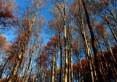 Sunny November by mariann.galanics