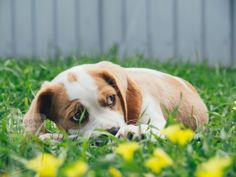 Cute Dogs Images, Cute Dog Pictures, Free Images, Dog Friendly Garden, Top 10 Dog Breeds, Puppy Socialization, Free Puppies, Love Dogs, Dog Leash