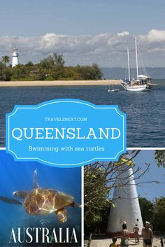 North Queensland - swimming with sea turtles. A snorkelling tour around the Low Isles in Tropical North Queensland' is a chance to swim with sea turtles in Australia