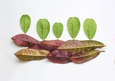 Botanical Art Minimalist Art Tropical Wall Art by AteliersDodard
