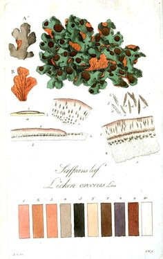 Great site with vintage printable images. This is another reference for patterns in nature. Color - Multi - Botanical 5
