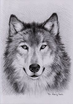 Wolf Study, 2011 - Ball Pen on A4 office paper (8.3x11.7 in) Watch how-to video here: