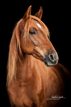 DeviantArt is the world's largest online social community for artists and art enthusiasts, allowing people to connect through the creation and sharing of art. Cute Horses, Pretty Horses, Horse Love, Horse Photos, Horse Pictures, Most Beautiful Horses, Animals Beautiful, Horse Wallpaper, Majestic Horse