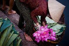 vietnam lotus