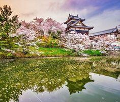 Oshiro Matsuri at Koriyama Castle, Nara | 10 Reasons Why You Must Forget Europe and Visit Japan During Spring Season