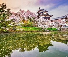 Oshiro Matsuri at Koriyama Castle, Nara | 10 Reasons Why You Must Forget Europe and Visit Japan During Spring Season