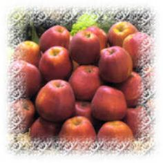 Here's a guide to choosing apple varieties for Florida, a state that is more famous for its citrus fruit. Organic Farming, Organic Gardening, Growing Apple Trees, Apple Varieties, Fruit Garden, Vegetable Garden, Starting A Garden, Backyard Farming, Growing Vegetables