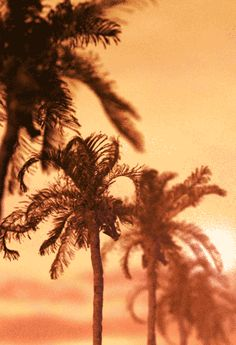 «artistic gif • palm trees in the wind ≋≋≋≋
