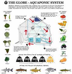 The Globe Aquaponic system