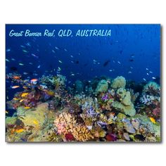 A postcard featuring abundant schools of tropical fish and an amazing variety of colorful hard and soft corals. The photo was taken on Australia's Great Barrier Reef. #coral #reef #ocean #sea #diver #tropicalfish #greatbarrierreef #coralsea #coralreef #nature