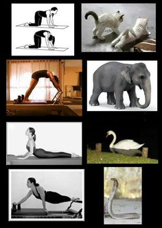 Joseph Pilates used the movement of animals as inspiration for contrology exercises (now known as pilates)
