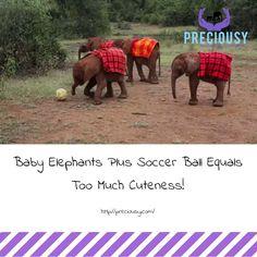 They are having so much fun!!!  http://blog.therainforestsite.com/elephant-soccer-playing/?utm_source=tes-tesfan&utm_medium=social-fb&utm_term=20170314&utm_content=link&utm_campaign=elephant-soccer-playing&origin=tes_tesfan_social_fb_link_elephant-soccer-playing_20170314