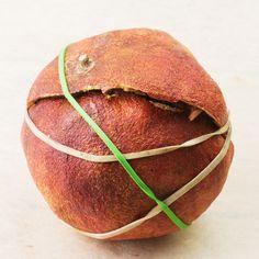 Split Pomegranate - Split Pomegranate tied with Rubber bands
