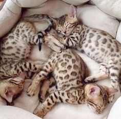 Ah... Cats And Kittens #cool