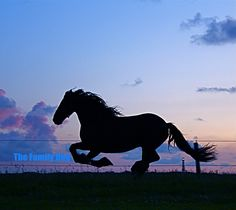 horse at sunset!!!!!!!!!!!!!!!!!!!!!!!!!!!!!!!!!!!!!!!!!!!!!!!!!!!