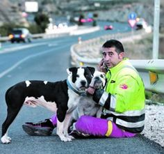 Crane operator Francisco Javier Caravaca blocks traffic with crane to save a pit bull and a bull dog from being run over.