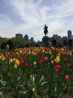Behold, here are the best instagrammable spots in Boston in #Spring #ILoveBoston #BostonLife