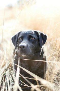 Hunde Foto: Natürliche Schönheit.jpeg Hier Dein Bild hochladen: http://ichliebehunde.com/hund-des-tages  #hund #hunde #hundebild #hundebilder #dog #dogs #dogfun  #dogpic #dogpictures
