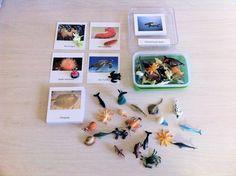 Montessori Sea Life Creatures and matching 3 Part Card Set via Etsy