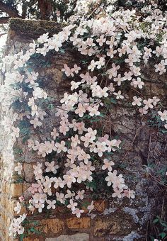 Flowers on stone wall.