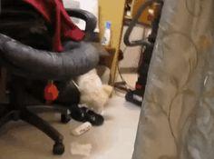15 Animais que foram pegos bem na hora exata da travessura - http://superinteressante.ga/15-animais-que-foram-pegos-bem-na-hora-exata-da-travessura/