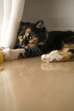 So pretty  Calico