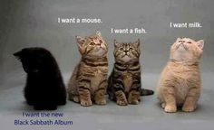 cats..Thats our Fuddy...