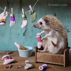 The Secret World of Hedgehogs (12 Pics) – Pleated-Jeans.com