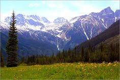 Wildblumen in den Rocky Mountains erhältlich als Poster oder Kunstdruck bei der Bildagentur Posterlounge