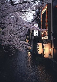 I really want to go to Kyoto, it seems like this whole board is just filled with pictures of Kyoto Aesthetic Japan, Japanese Aesthetic, Nature Aesthetic, Japanese Culture, Japanese Art, Beautiful World, Beautiful Places, Amazing Places, Japon Tokyo