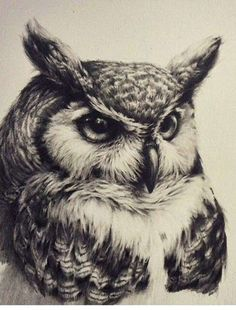 Free Owl Tattoos Best in 2016
