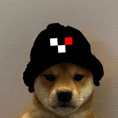 talking about a gang.  But that's a real GANG❕❕❗️  They're talking about a gang.  But that's a real GANG❕❕❗️  Doge, Memes, Avatar, Cute Animals, Hats, Diy Dog, Profile Pics, Caps Hats, Pretty Animals