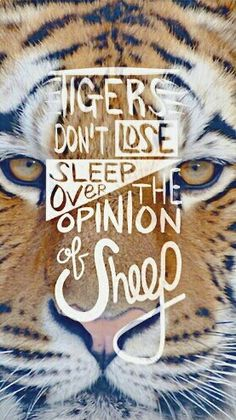 Tigers vs Sheep