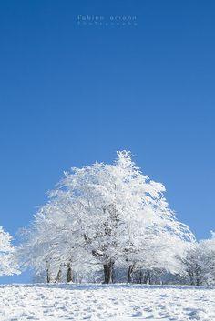 The Great White, Vosges, photo by Fabien Amann Photography @fabienfeub