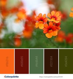 Color Palette Ideas from Flower Wildflower Flora Image Orange Color Palettes, Red Color Schemes, Color Combinations, Chromotherapy, Wild Flowers, Real Flowers, Color Harmony, Colour Board, Color Theory