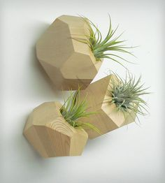 Faceted Wood Planter by Roots in Rust on Scoutmob Shoppe. Love this trio of airplants in geometric wood planters.