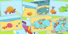 Sharing a Shell Story Sequencing Cards - sequence, stories, books Sequencing Cards, Story Sequencing, Literacy Activities, Summer Activities, Sharing A Shell, Key Stage 1, Primary Resources, Teaching Aids, New School Year